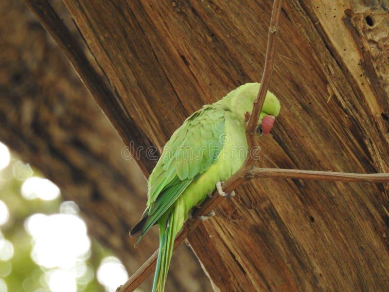 Green Parrots price in Pakistan