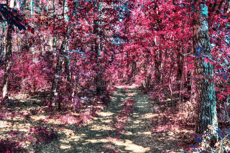 Beautiful infrared shots of pink and purple forest landscapes. Found in europe royalty free stock photography
