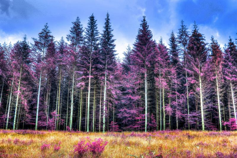 Beautiful infrared shots of pink and purple forest landscapes. Found in europe stock photo