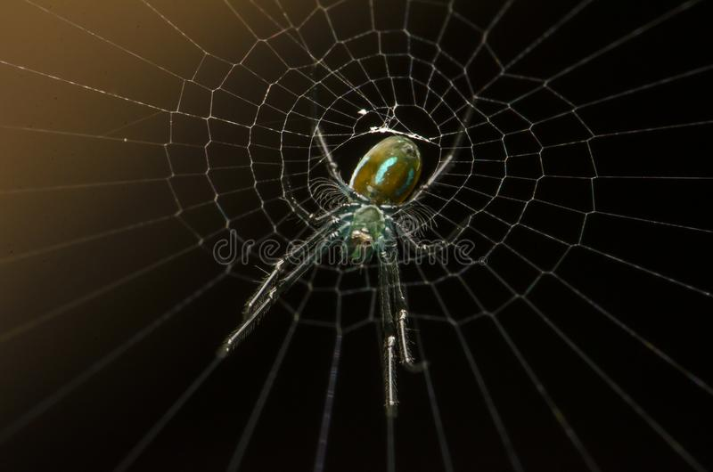 Beautiful insect killer spider eating in malaysia stock image