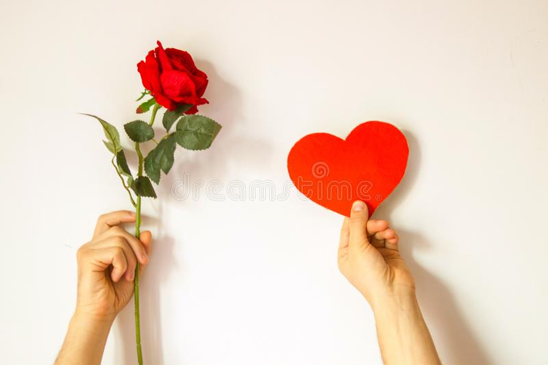 Beautiful interesting background for Valentine`s day. Conceptual photo with red rose and heart on white background. Male hands hold a rose and an empty space royalty free stock photo