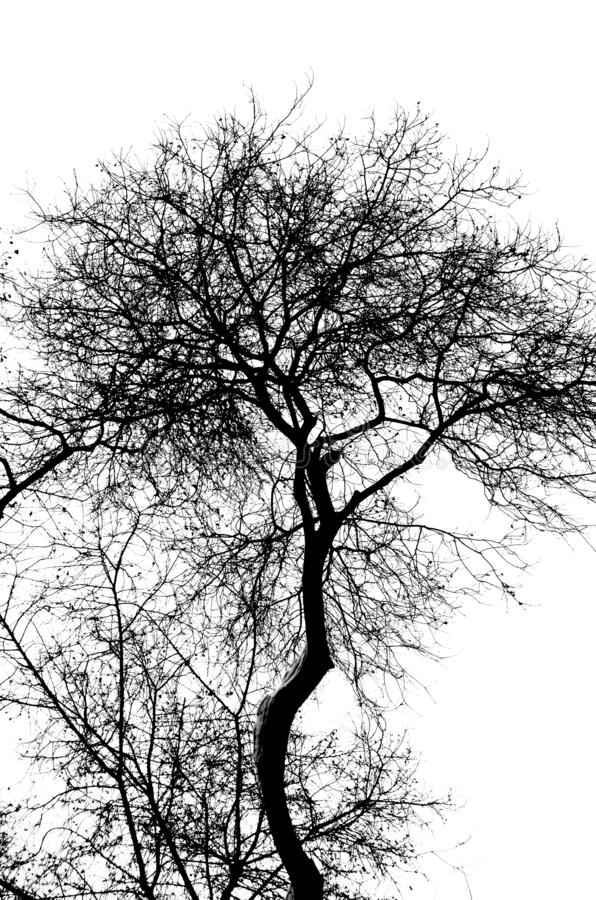 Beautiful and interesting view and abstraction. On the contour of trees on a white background royalty free stock image