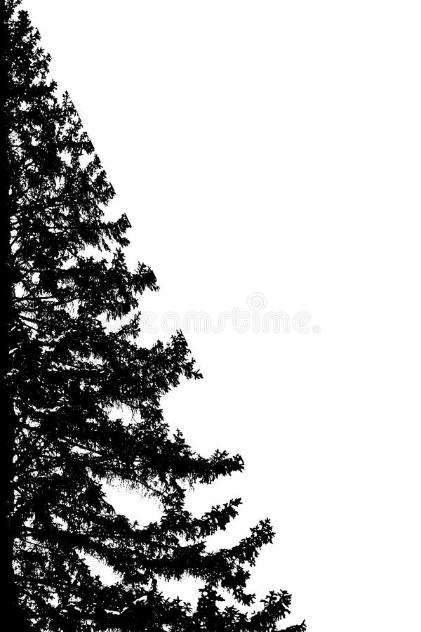 Beautiful and interesting view and abstraction. On the contour of trees on a white background stock photos
