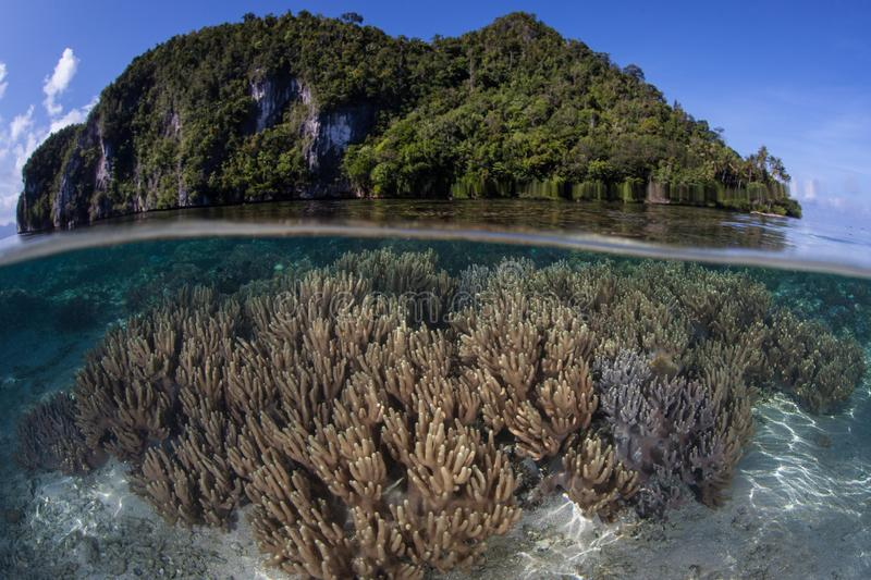Beautiful Island and Coral Reef in Indonesia royalty free stock image