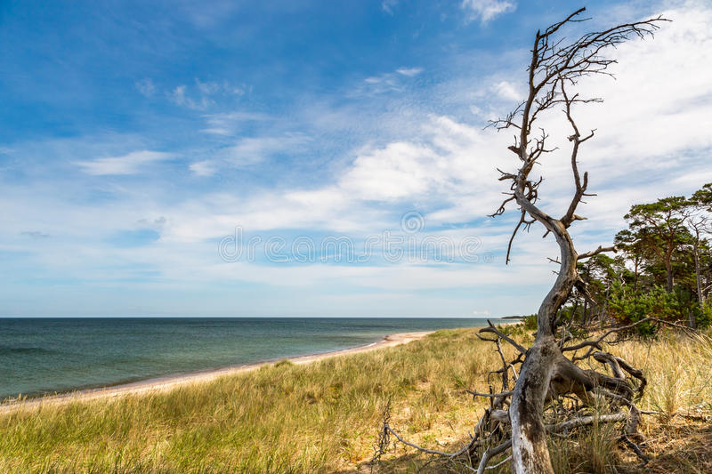 Beautiful island landscape summer view of sea, beach, sky and nature. Seen from a hill at the national park Gotska sandon Sweden royalty free stock image