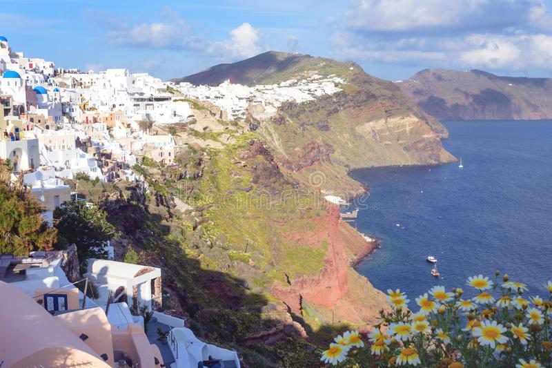 Wild white daisies on the background of the sea. Beautiful island of Santorini, Greece. stock photography