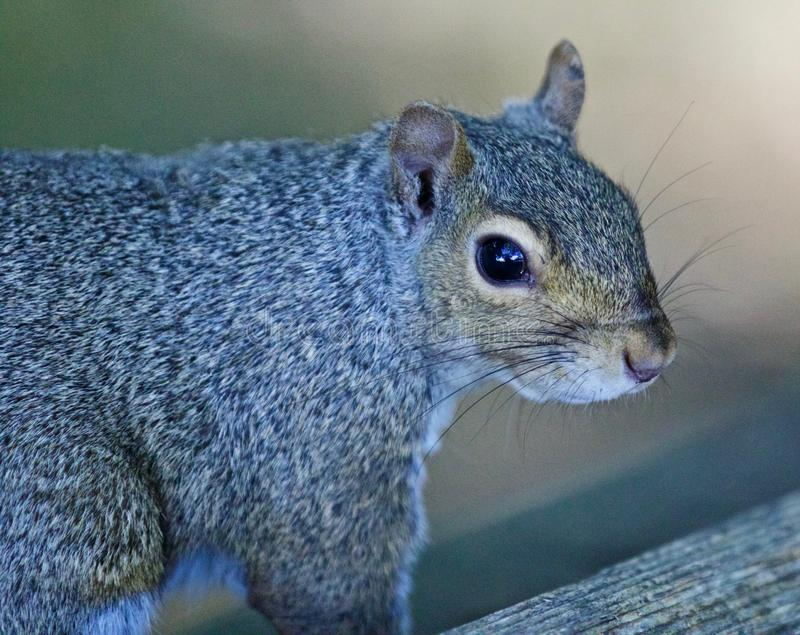 Beautiful isolated picture with a cute squirrel. Beautiful isolated photo of a funny cute squirrel stock photo