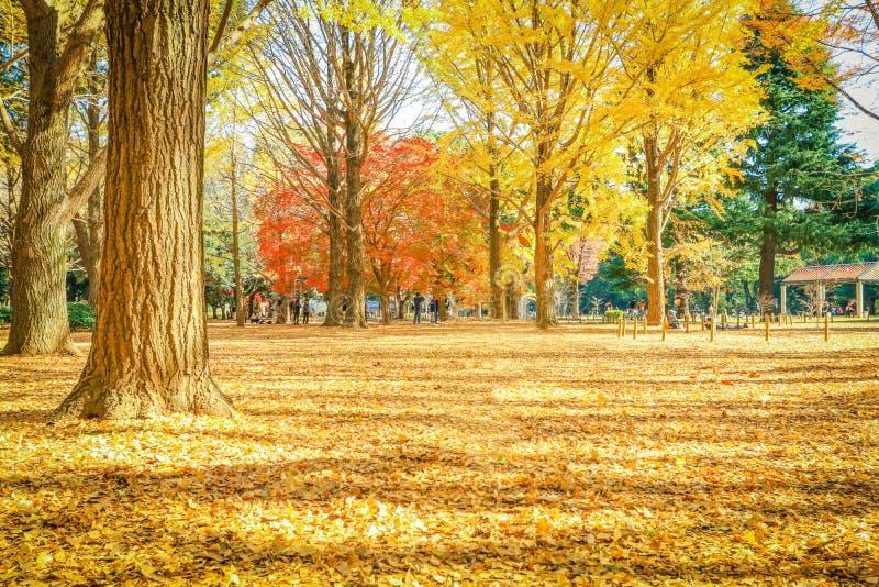 Beautiful Japan autumn leaves in Meiji Jingu Gaien Park of Tokyo royalty free stock images