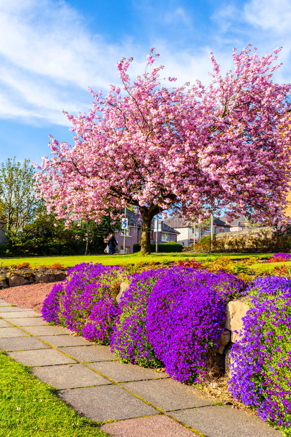 A List of Ornamental Trees for Landscaping With Beautiful ... |Beautiful Japanese Trees