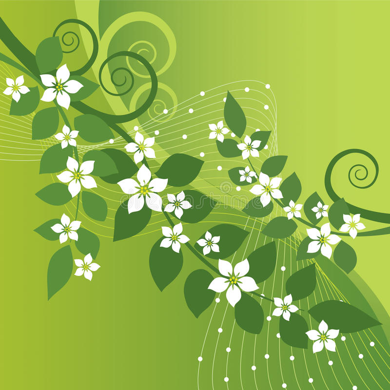Beautiful jasmine flowers and green swirls. On green background. This image is a vector illustration stock illustration