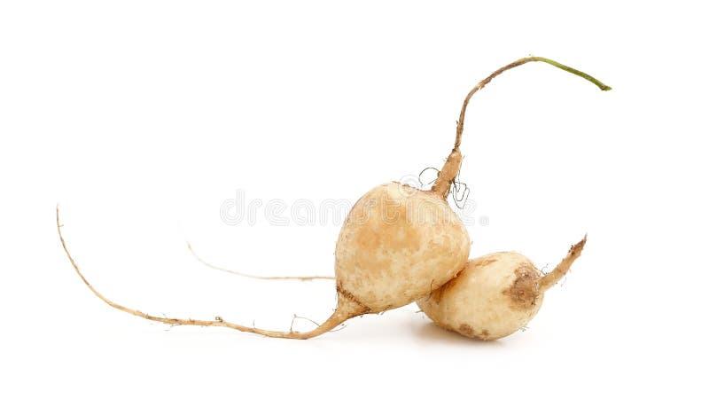 Beautiful Jicama fruit isolated on white background stock photography