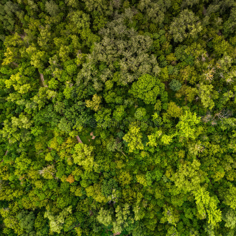 Forest pattern. View from above. Beautiful juicy green pattern from the tops of deciduous trees. View from above. Aerial view. A picture resembling moss in the royalty free stock photography