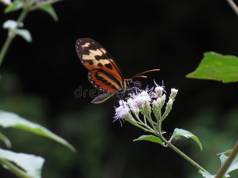 Beautiful Jungle Butterfly stock image
