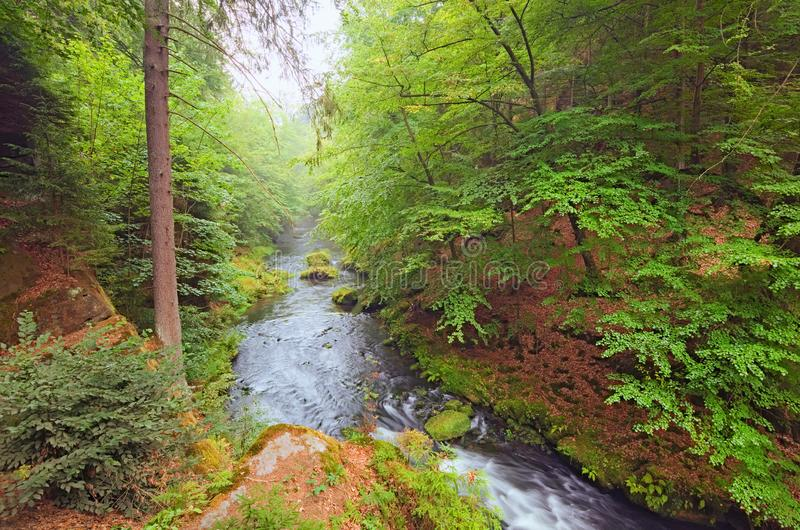 Beautiful Kamenice River in green forest. Foggy summer morning. Bohemian Switzerland National Park stock photography