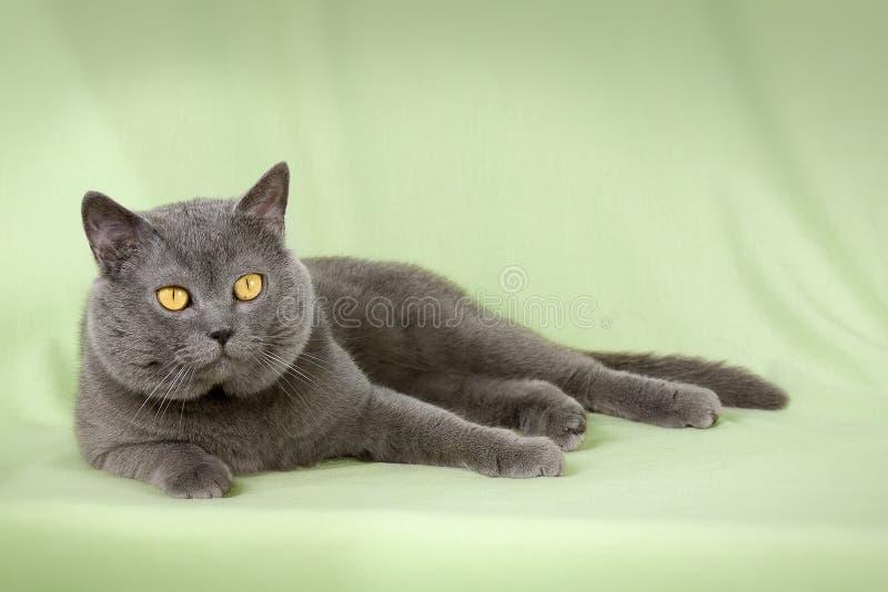 Beautiful Kitten Royalty Free Stock Photos