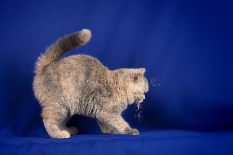 Download Beautiful kitten stock image. Image of animal, mammal - 17950919