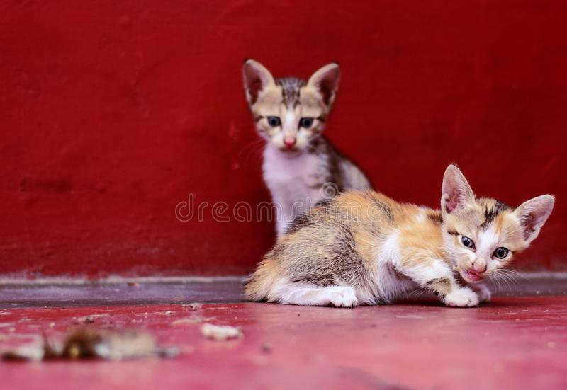 Beautiful kittens are seating on the floor stock image