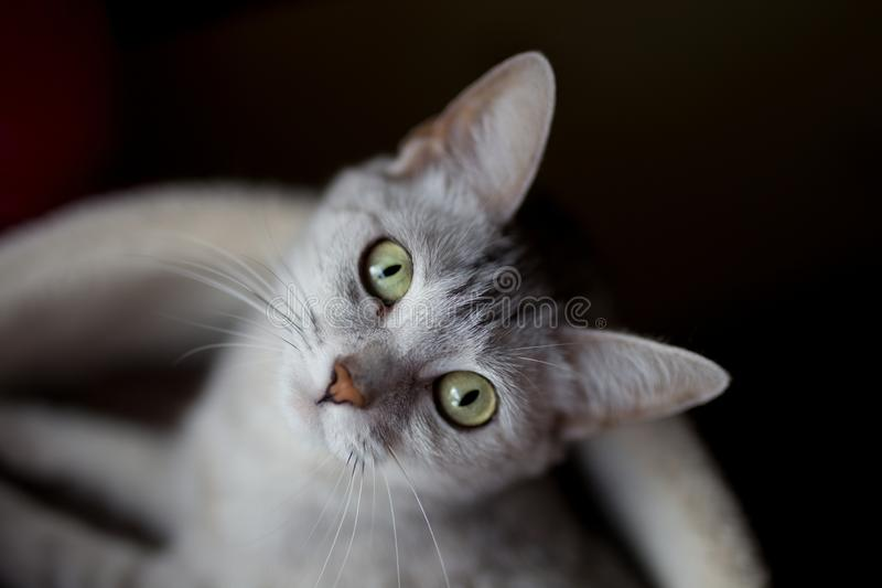 Beautiful kitty in a litter box stock images