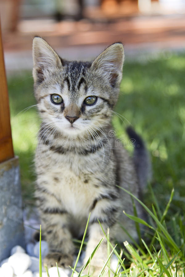 Beautiful Kitty outdoor royalty free stock photography