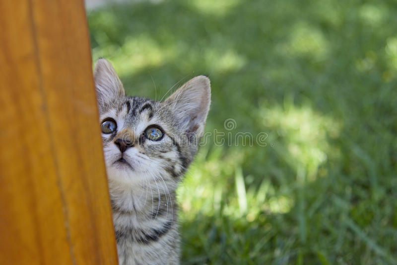 Beautiful Kitty outdoor looking up stock photography