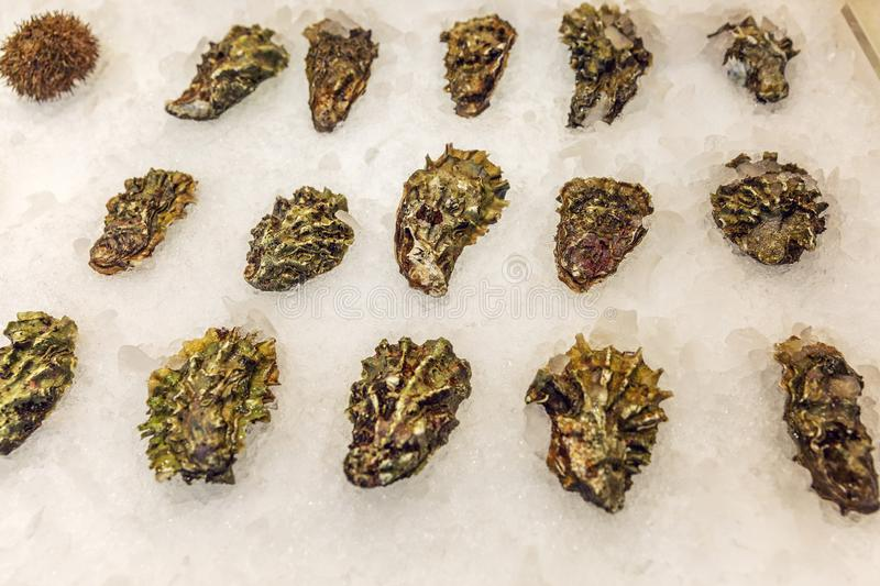 Beautifully laid oysters on a counter on ice. Close-up. Top view stock photos