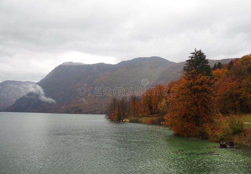 Beautiful Lake Bohinj royalty free stock photo