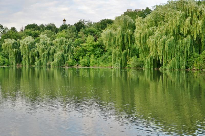 Beautiful lake with green trees whose branches fall into the water stock photo