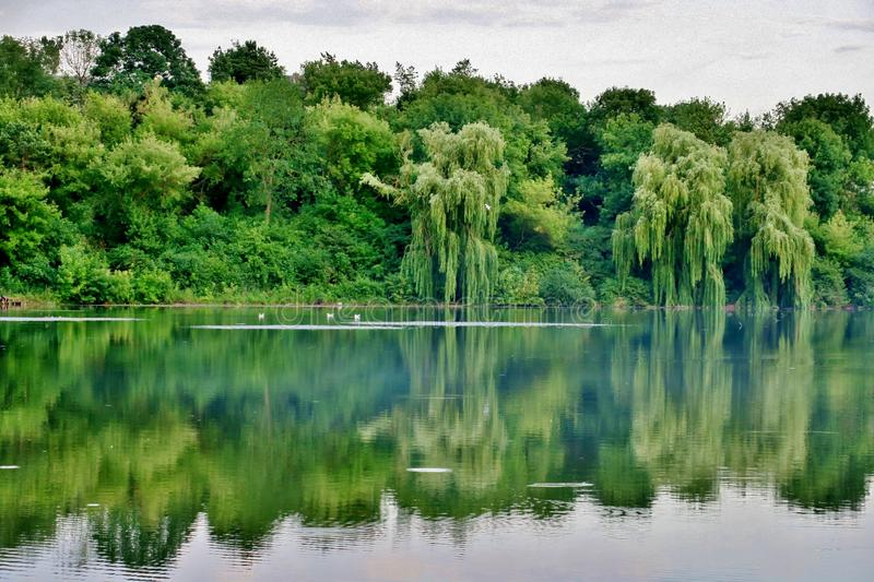 Beautiful lake with green trees whose branches fall into the water royalty free stock image