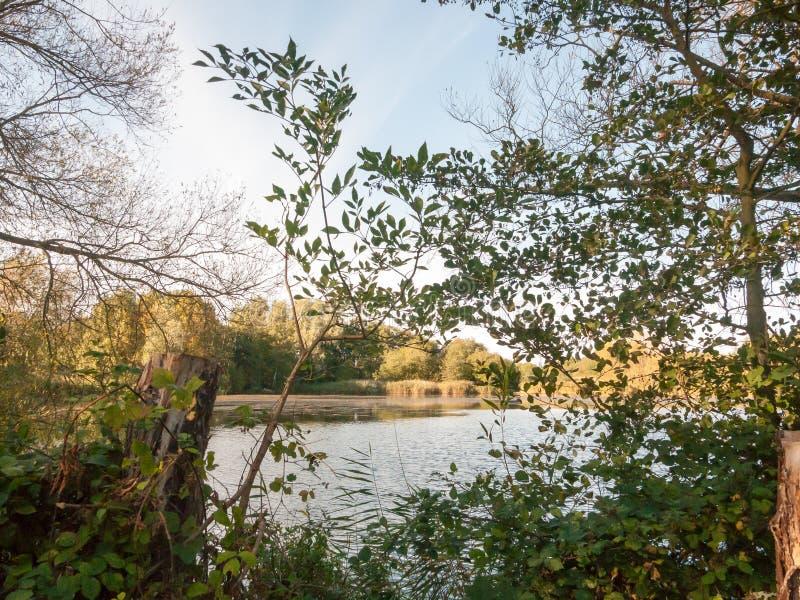 Beautiful lake scene outside summer autumn green yellow. Essex; england; uk stock photos