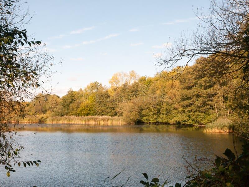 Beautiful lake scene outside summer autumn green yellow. Essex; england; uk stock images