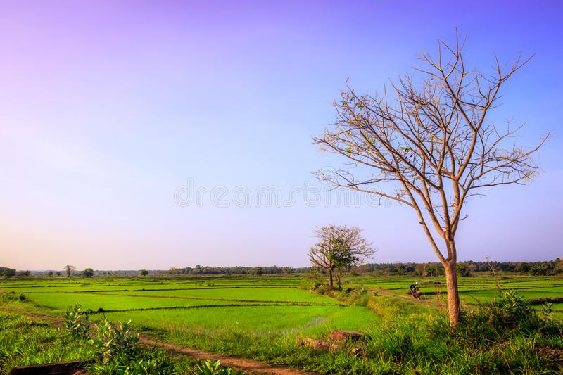 Beautiful landscape of agricultural land stock photography