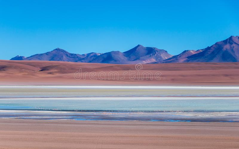 Beautiful background with Altiplanic Lagoon, a shallow saline lake and blue sky stock photo