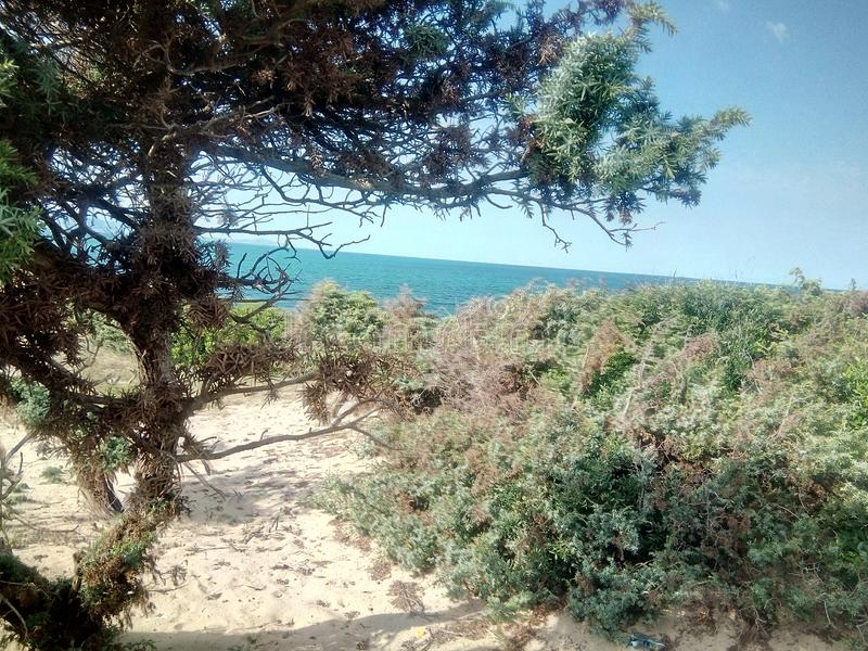 Beautiful landscape in annaba algeria. Forest trees and green plants overlooking the sea in annaba stock photography