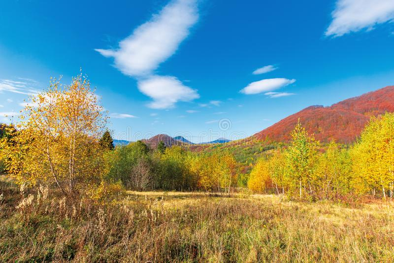 Beautiful landscape in autumn royalty free stock images
