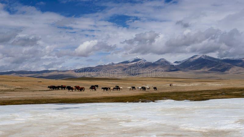 Herdsman grazing horse in Bayanbulakk royalty free stock images