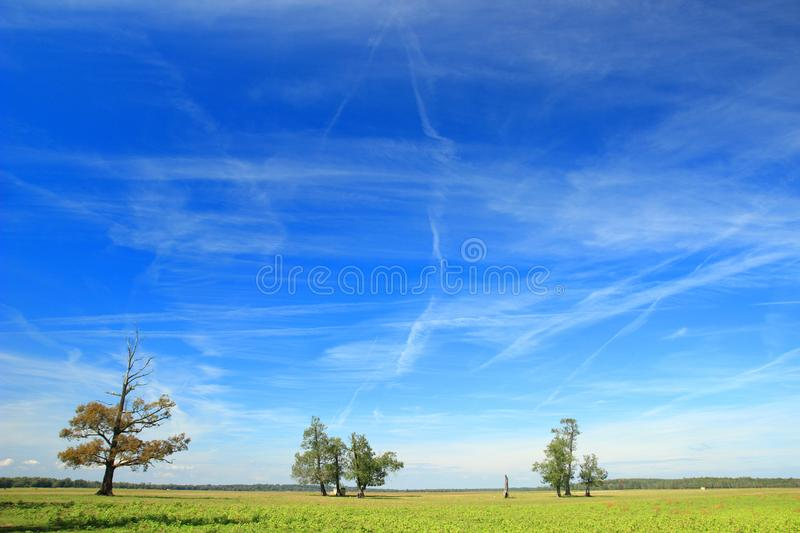 Beautiful landscape with blue sky and some clouds, green meadow and oak trees royalty free stock photo