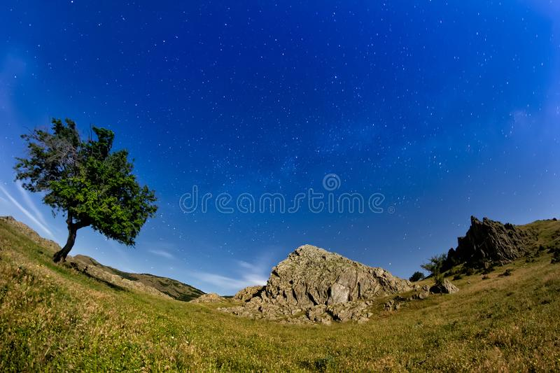 Beautiful landscape with a blue starry sky, a lonely tree and rocks stock photography
