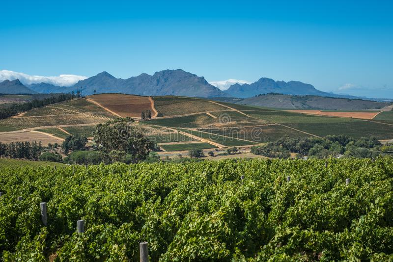Beautiful landscape of Cape Winelands, wine growing region in South Africa stock photography