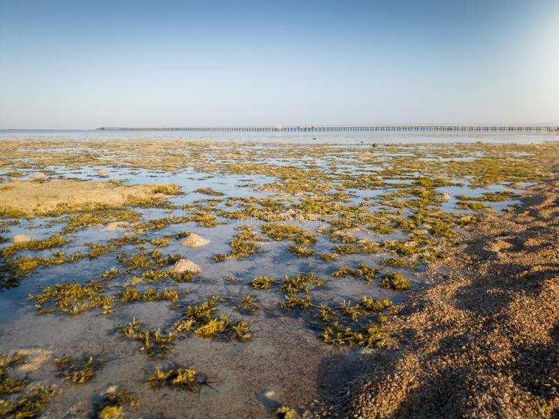 Beautiful landscape of coral reef, sea weeds and long pier at sea lit by sunset light rays stock photography