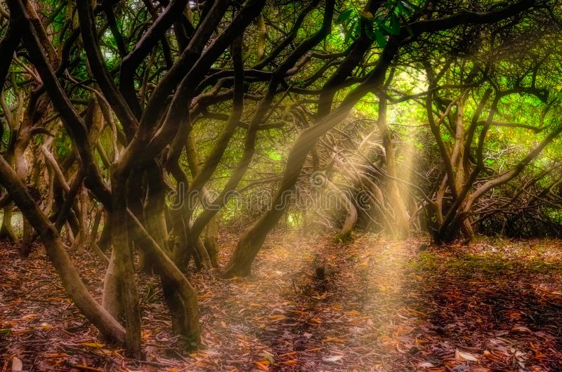 Beautiful landscape view of sunrays shining through trees and foliage stock photo