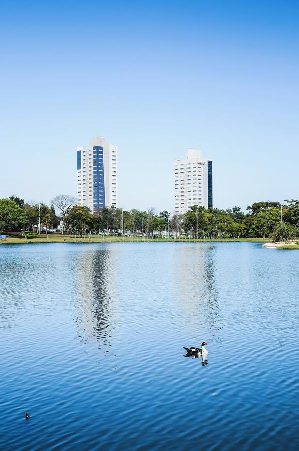 Beautiful landscape of duck swimming on the water of a lake on a royalty free stock photography