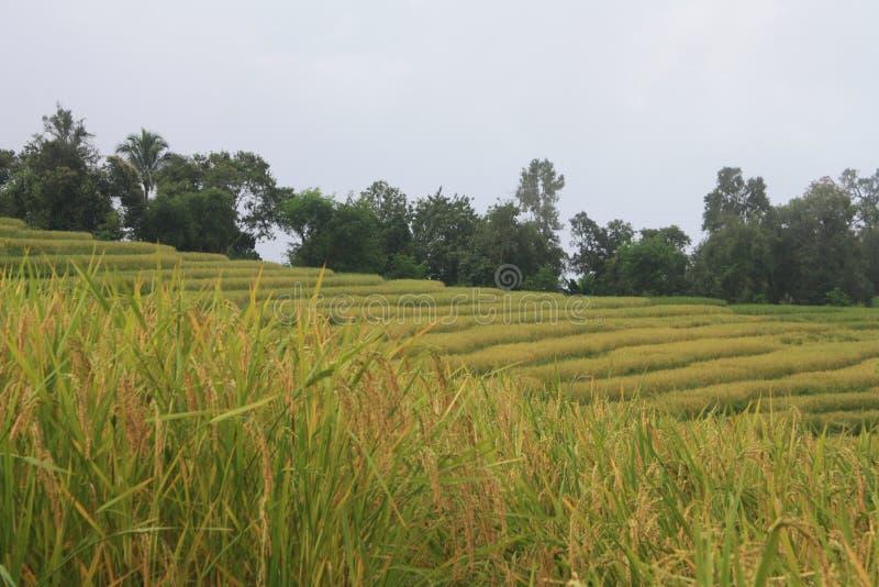 Beautiful landscape and farm royalty free stock photo