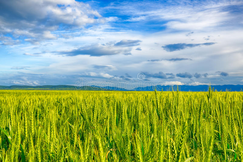 Beautiful landscape field of wheat, cloud and mountain. HDR image stock photos