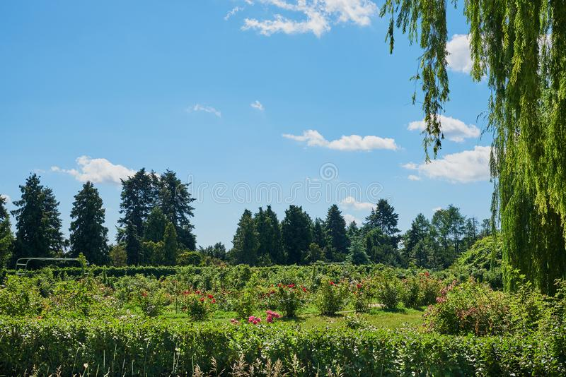 Beautiful landscape with firs, flowers, weeping willow. Cumulus clouds, blue sky on a sunny summer day. National Botanical Garden Kiev, Ukraine royalty free stock photography