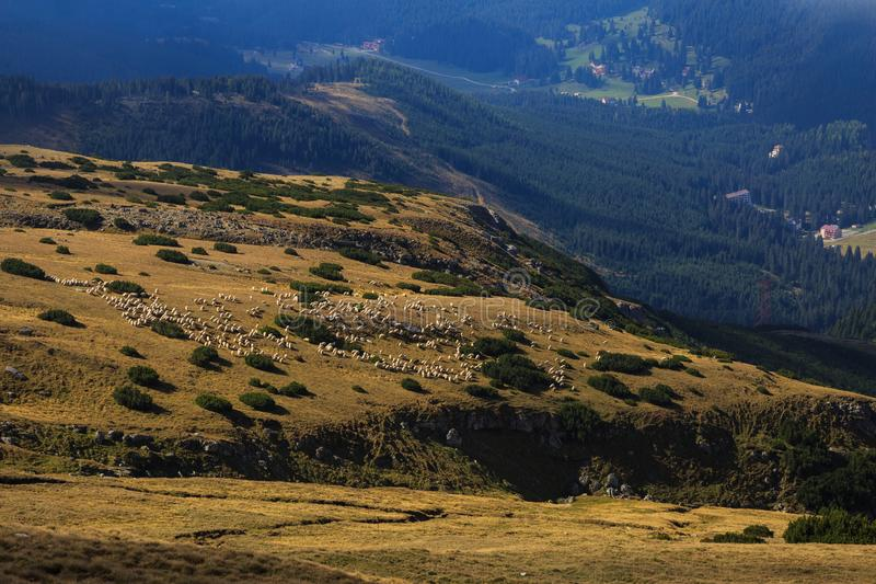 Beautiful landscape with flock of sheep in the Romanian Carpathian mountains. In this photo you can see beautiful landscape with flock of sheep in the Romanian stock photos