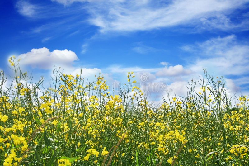 Beautiful landscape with flowers stock image