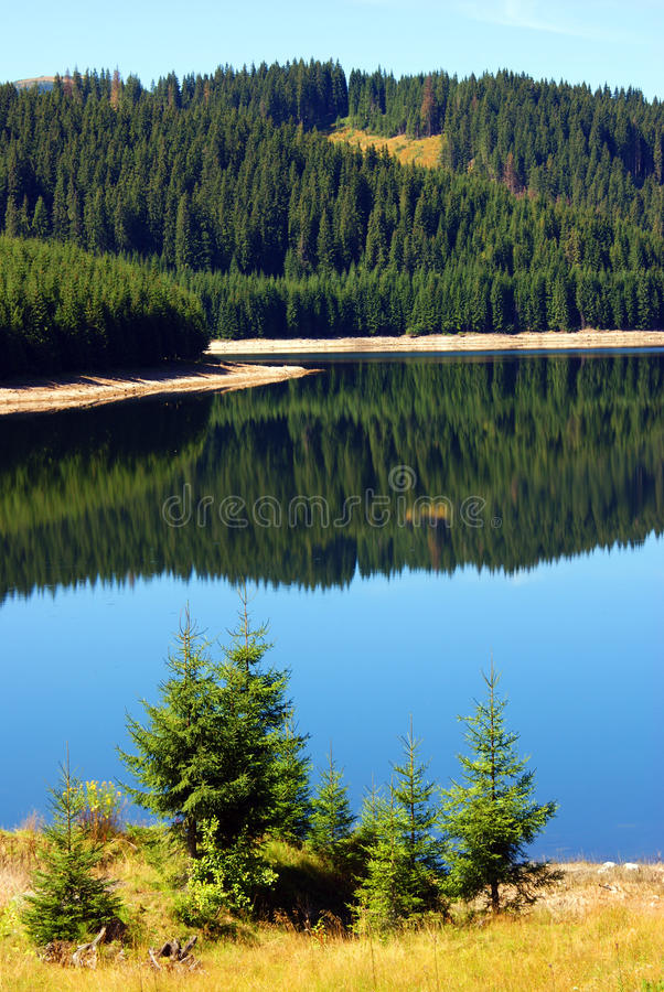 Free Beautiful Landscape: Forest Reflected In Lake Stock Photos - 15801043