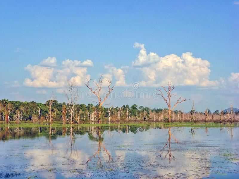 Beautiful screenery of Tonle sap lake, Cambodia. Beautiful landscape with the forest in Tonle sap lake at Cambodia with blue sky and white clouds, reflection on royalty free stock image