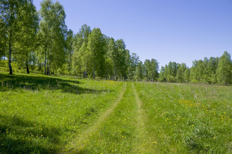 Beautiful landscape the green wood with yellow colors in a green grass a landscape in Russia. Beautiful landscape the green wood with yellow colors in a green royalty free stock image