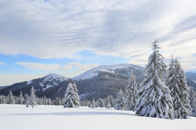 Beautiful landscape of high mountains, wood and blue sky. Winter scenery. Lawn covered with white snow. Location place Carpathian royalty free stock images